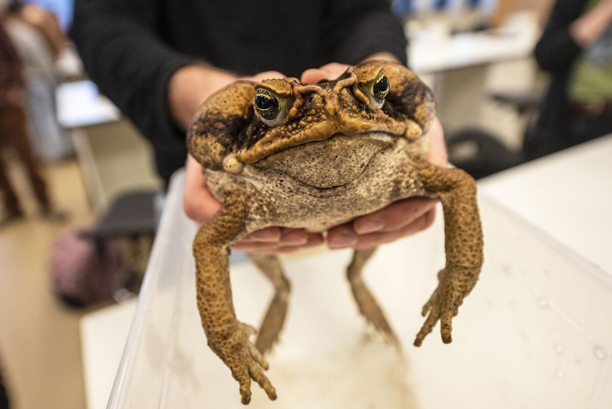Biologie - amfibieën en reptielen